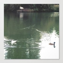 Birds swimming, Water Ripples Canvas Print