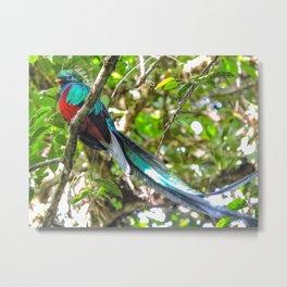 Quetzal Monteverde,  Costa Rica Metal Print