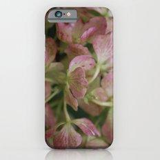 Pink Hydrangea iPhone 6s Slim Case
