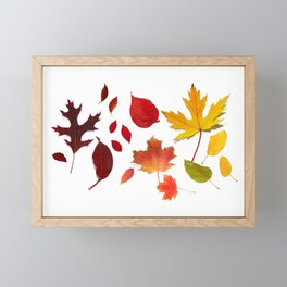 Autumn Rainbow, Fallen Leaves Framed Mini Art Print