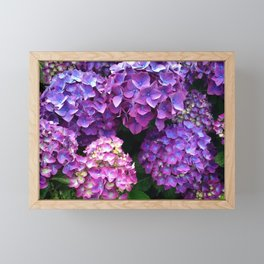 Hydrangea Lovers Framed Mini Art Print