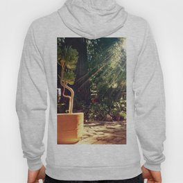 Sunshine on succulents Hoody