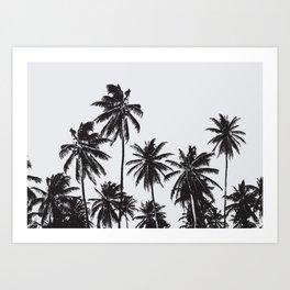 Palm 05 Art Print