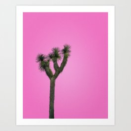 Joshua Tree with Minimal Pink Sky Art Print