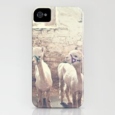 Young Alpacas  iPhone (4, 4s) Slim Case