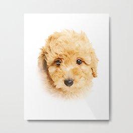 Ginger Poodle Metal Print