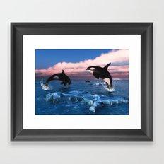 Killer whales in the Arctic Ocean Framed Art Print