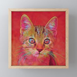 Popular Animals - Kitten Framed Mini Art Print