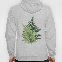 Summer Forest Ferns Hoody
