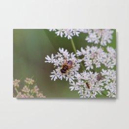 Bee relaxing on a flower. Metal Print