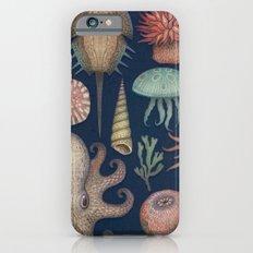 Aequoreus Vita Slim Case iPhone 6s