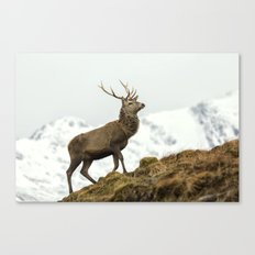 Red Deer Stag in Winter Canvas Print