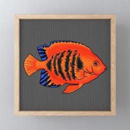 Flame Angelfish Framed Mini Art Print