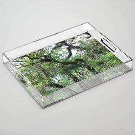 Hiking in Florida Acrylic Tray