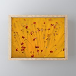 Fields of Red and Gold: Closeup of St. John's Wort Framed Mini Art Print