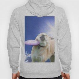 Frisbee Dog Hoody
