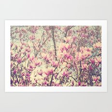 Magnolia Blossoms Early Spring Botanical Art Print