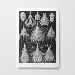 Crytoidea–Flaschenstrahlinge from Kunstformen der Natur (1904) by Ernst Haeckel. Metal Print