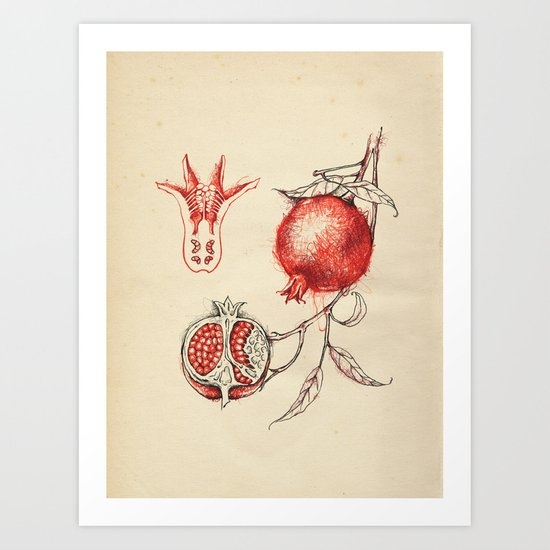 Cabinet of Curiosities No.3 Art Print