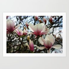 Magnolia Tree Art Print