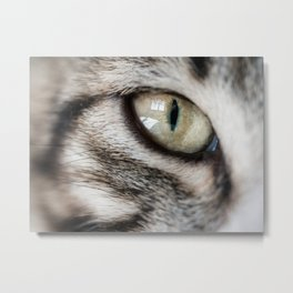 eye cat Metal Print