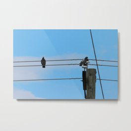 Pigeons on a Wire Metal Print