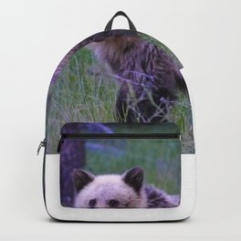 Grizzly bear cub in Jasper National Park | Alberta Backpack