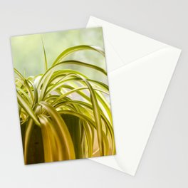 Chlorophytum, indoor potted plant, close up - image Stationery Cards
