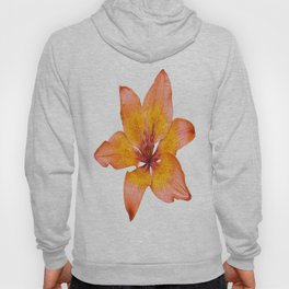 Coral Colored Lily Isolated on White Hoody