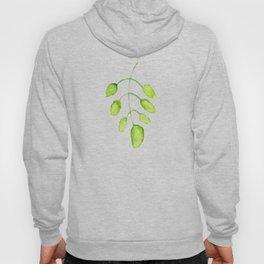 Watercolor Green leave Hoody