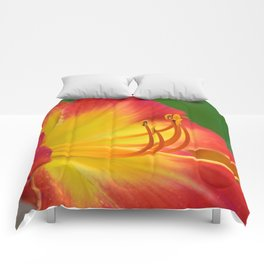 Ruby Spider Day Lily Comforters