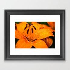 Macro Orange Flower Framed Art Print