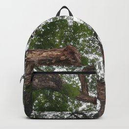 looking up tree branch Backpack