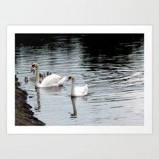 Swan & Cygnets Art Print