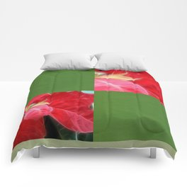 Mottled Red Poinsettia 2 Blank Q5F0 Comforters