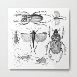 Vintage Beetle black and white drawing Metal Print