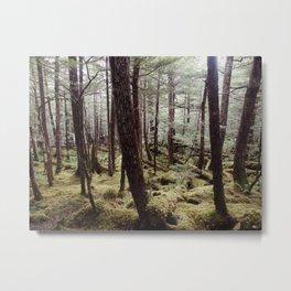 Tree gathering | Nature Photography Metal Print