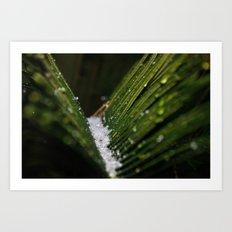 Snowy Palms Art Print