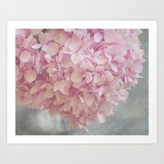 Delicate, pastel pink hydrangea flower Art Print