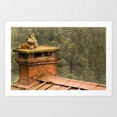 Monkey meditation Art Print