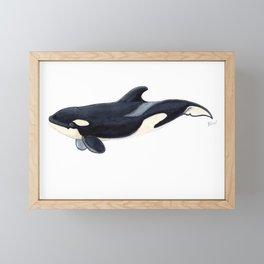 Baby orca Framed Mini Art Print