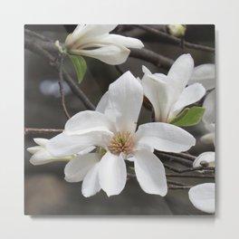 magnolia 04 Metal Print
