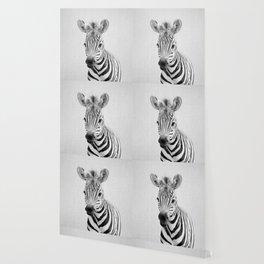 Baby Zebra - Black & White Wallpaper