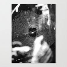 spider web 2016 Canvas Print
