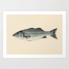 A Fish Art Print