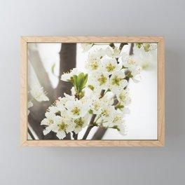 Plum Tree Blossom Framed Mini Art Print