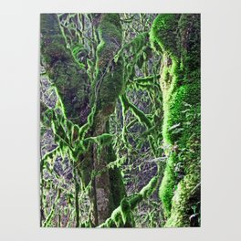 RAIN FOREST MAPLES IN SPRING 2 Poster