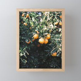 Oranges | Moody colorful travel photography | Botanical green wall with oranges Framed Mini Art Print