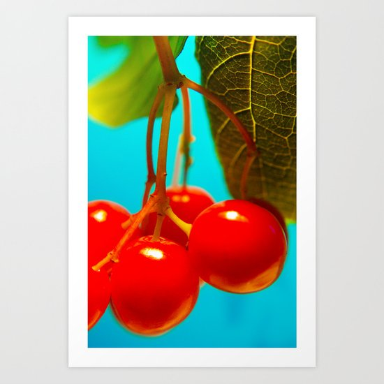 high bush cranberry Art Print