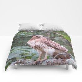 hawk Comforters